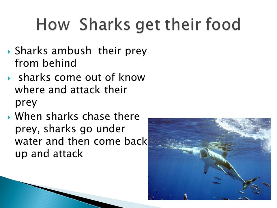 How Sharks get their food