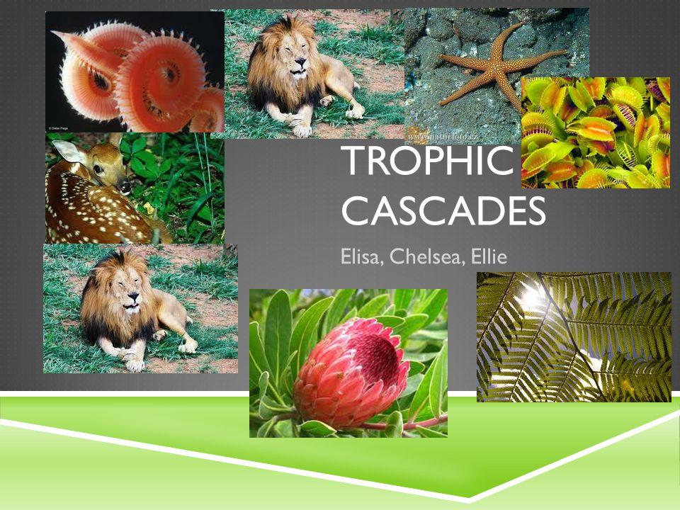 Trophic CASCADES Elisa, Chelsea, Ellie
