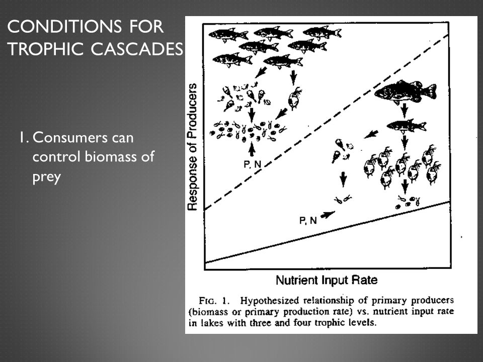 Conditions for Trophic Cascades