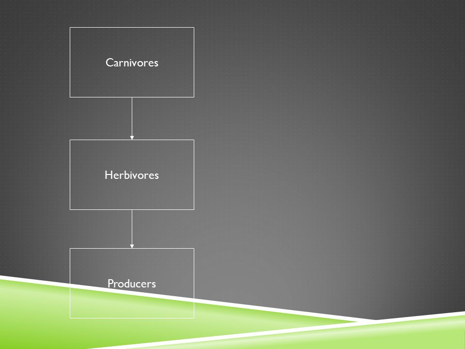 Carnivores Herbivores Producers