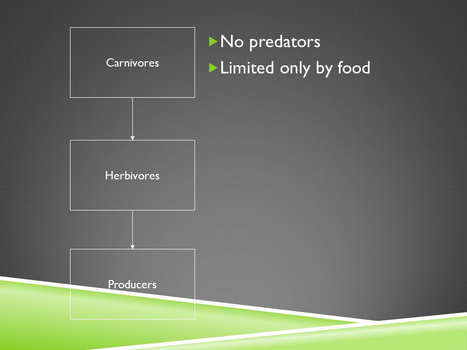 Carnivores No predators Limited only by food Herbivores Producers