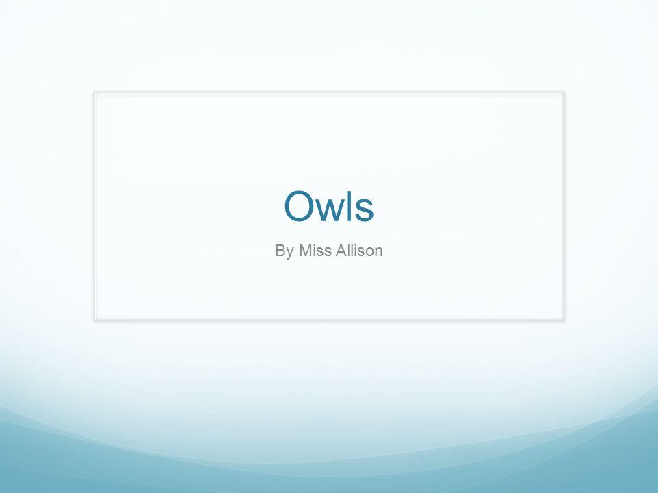 Owls By Miss Allison