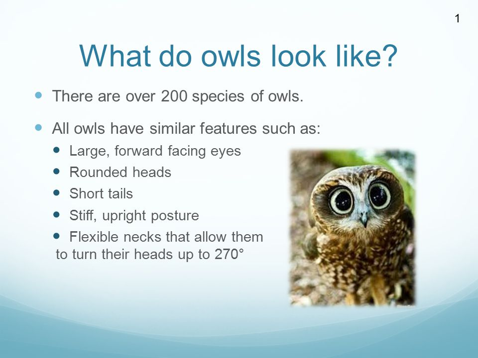 What do owls look like There are over 200 species of owls.