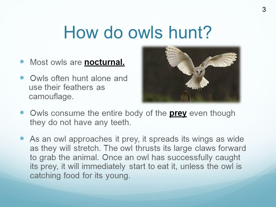How do owls hunt Most owls are nocturnal. Owls often hunt alone and