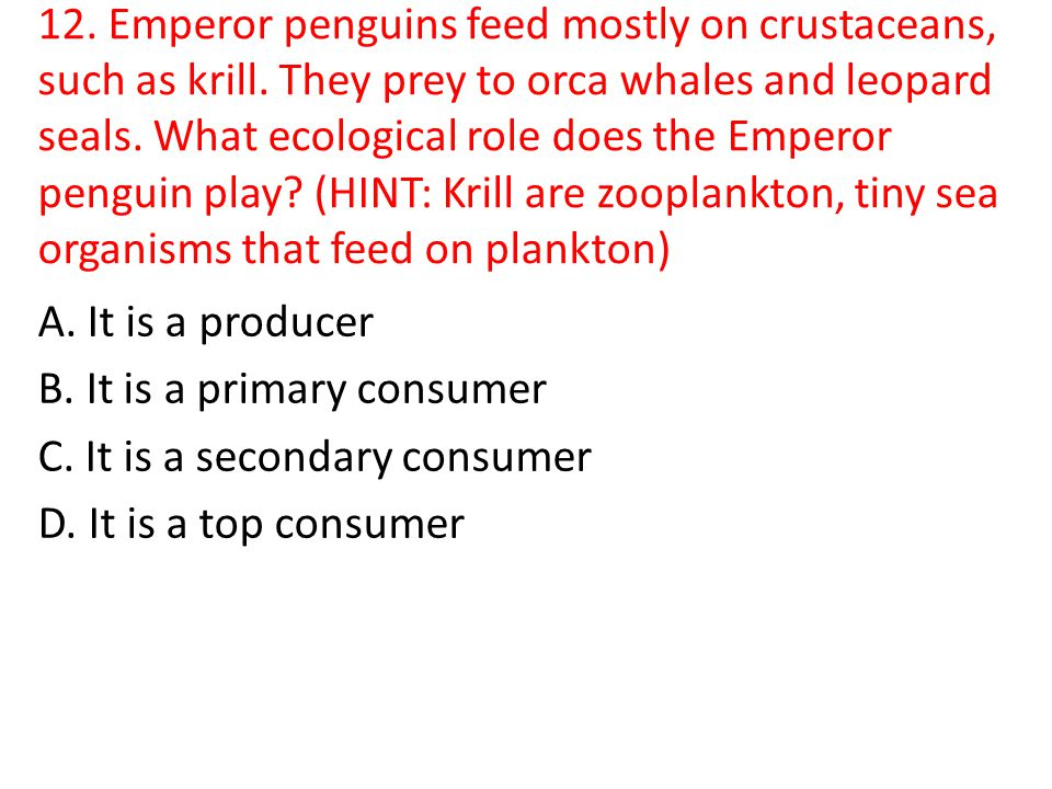 12. Emperor penguins feed mostly on crustaceans, such as krill