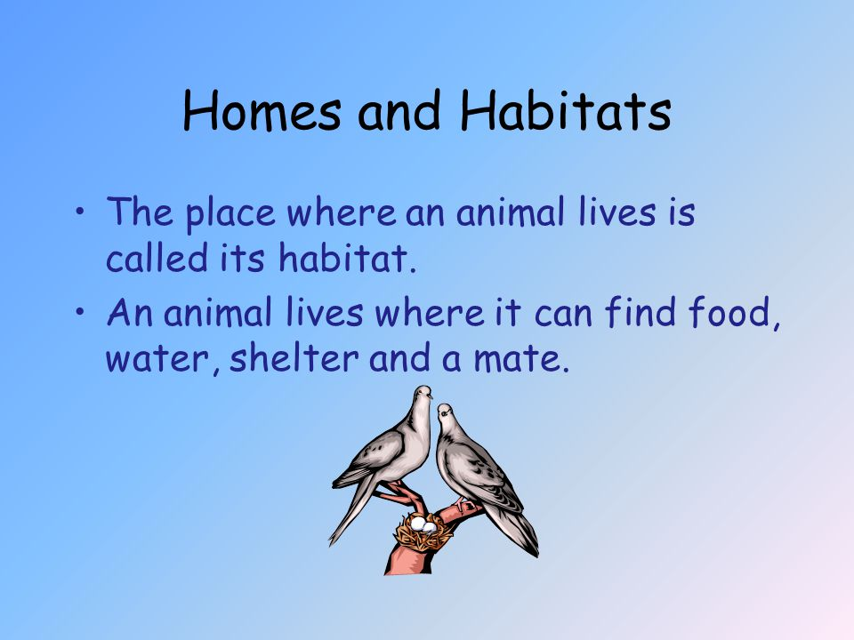 Homes and Habitats The place where an animal lives is called its habitat.