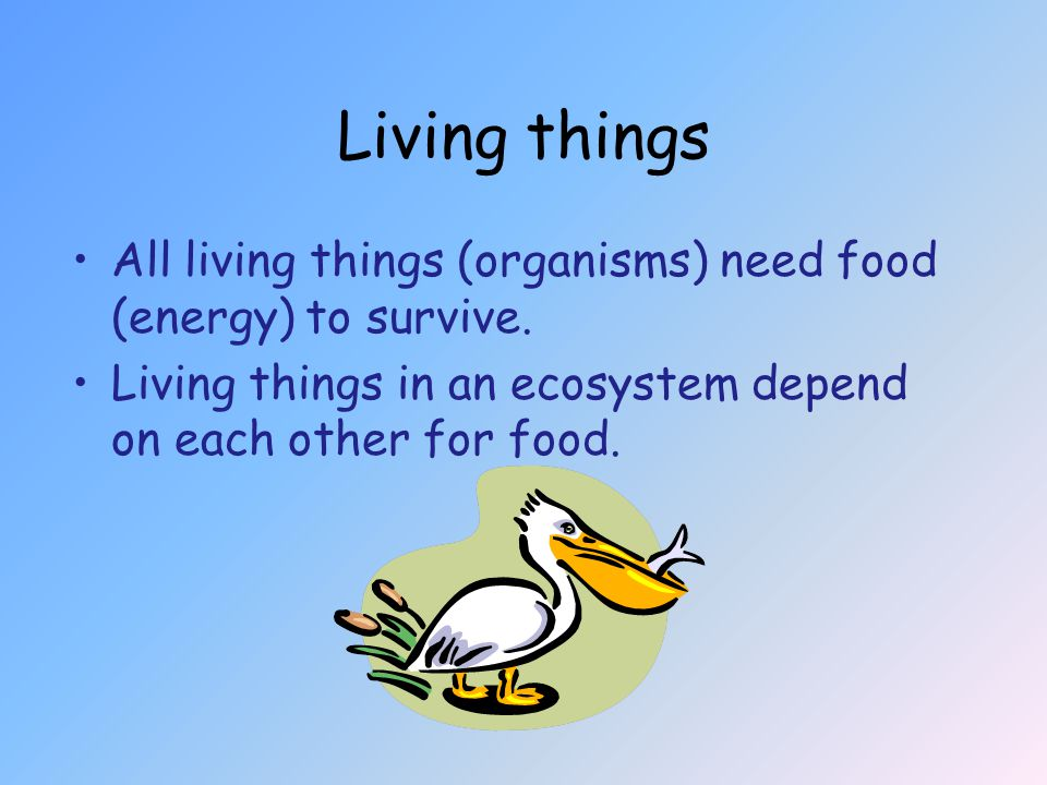Living things All living things (organisms) need food (energy) to survive.