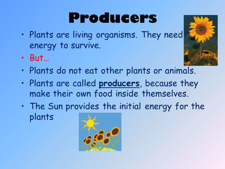 Producers Plants are living organisms. They need energy to survive.