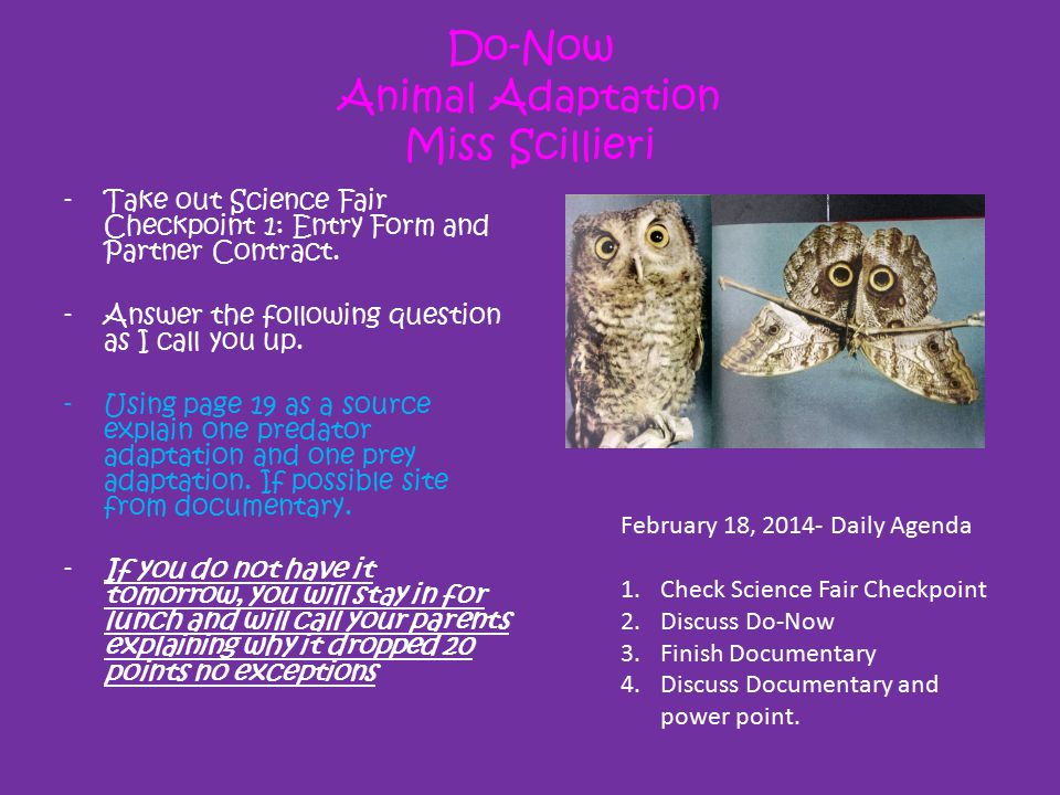 Do-Now Animal Adaptation Miss Scillieri