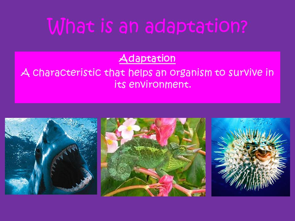 What is an adaptation Adaptation A characteristic that helps an organism to survive in its environment.