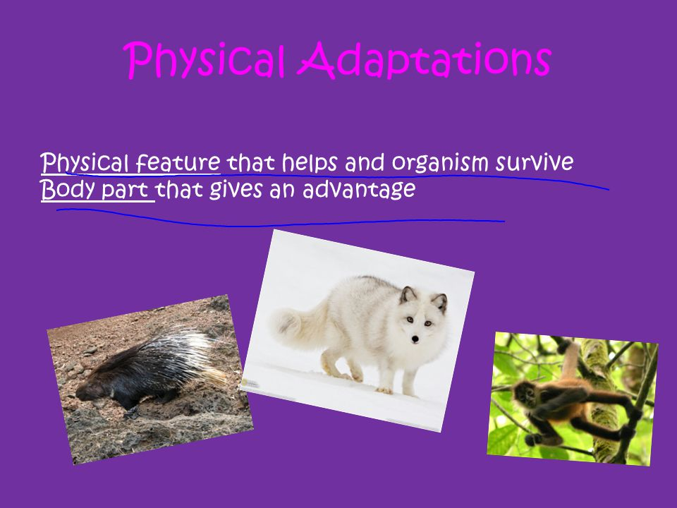Physical Adaptations Physical feature that helps and organism survive