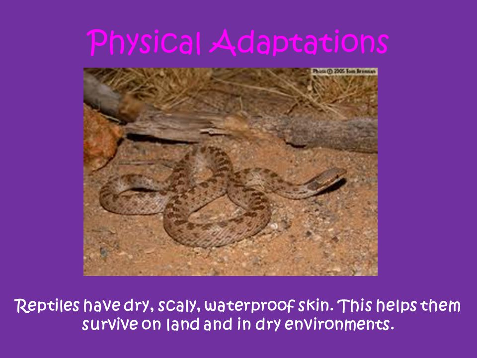Physical Adaptations Reptiles have dry, scaly, waterproof skin.