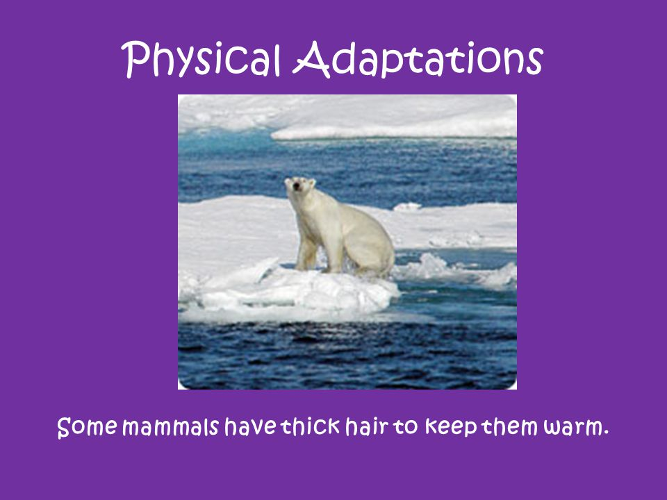 Some mammals have thick hair to keep them warm.