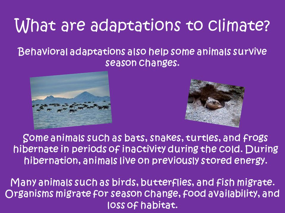 What are adaptations to climate