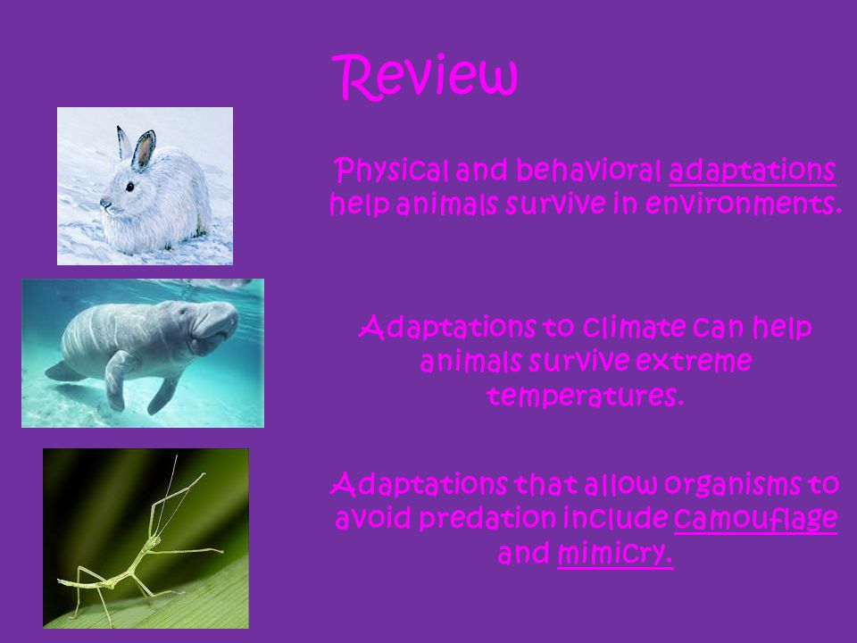 Adaptations to climate can help animals survive extreme temperatures.