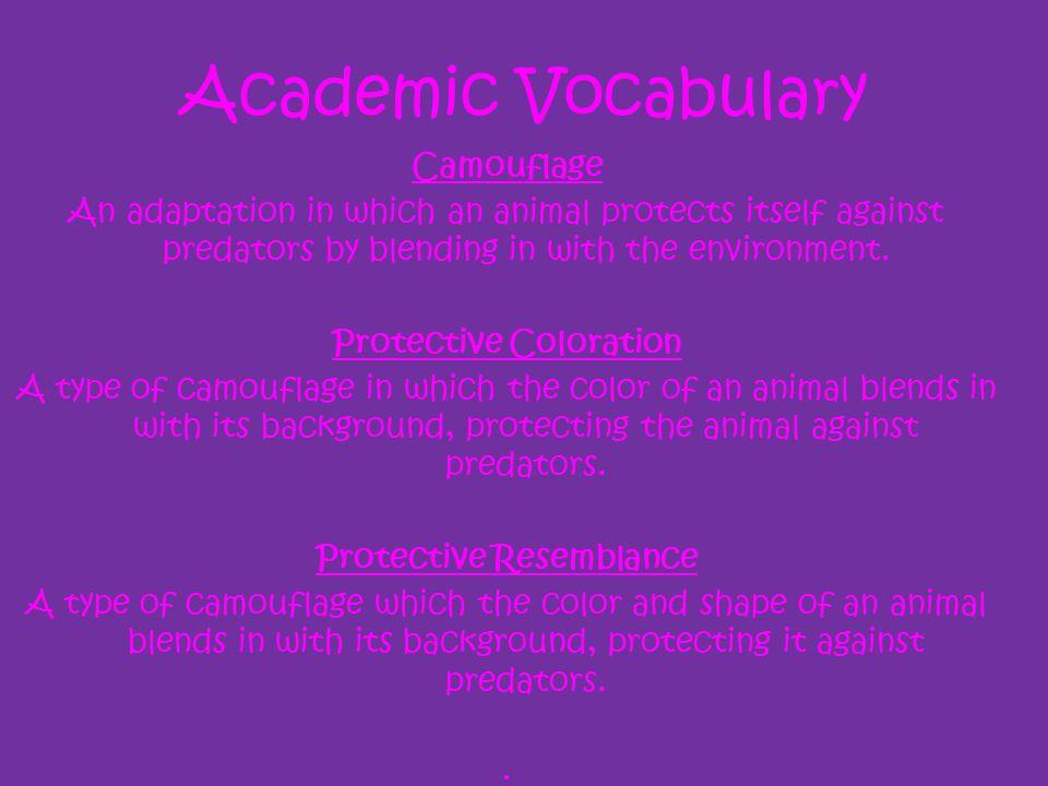 Academic Vocabulary Camouflage