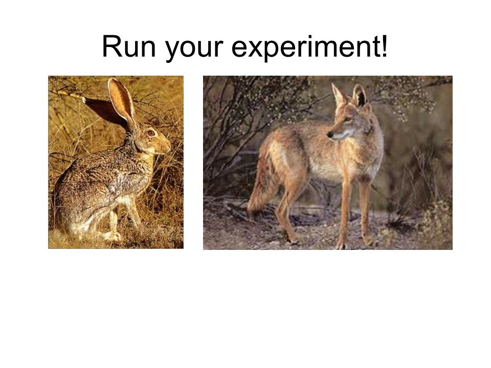 Run your experiment!