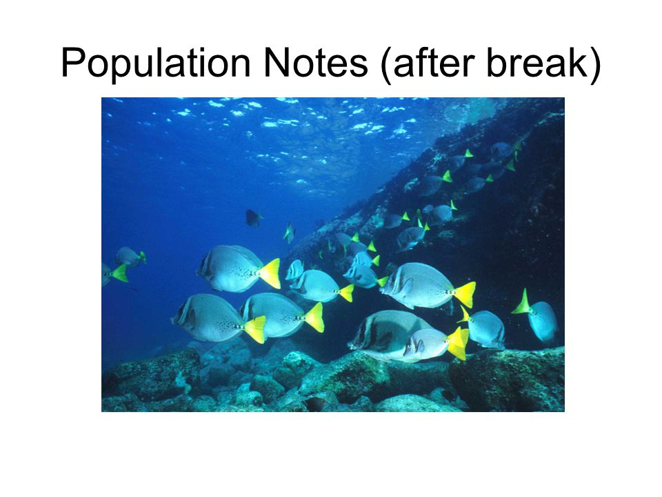 Population Notes (after break)