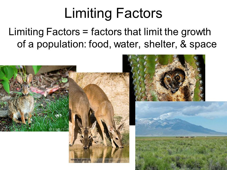 Limiting Factors Limiting Factors = factors that limit the growth of a population: food, water, shelter, & space.
