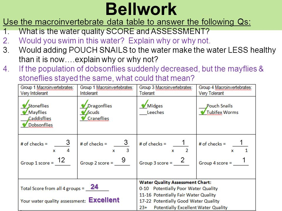 Bellwork Use the macroinvertebrate data table to answer the following Qs: What is the water quality SCORE and ASSESSMENT