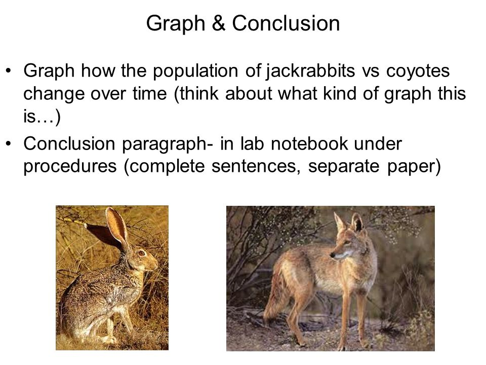 Graph & Conclusion Graph how the population of jackrabbits vs coyotes change over time (think about what kind of graph this is…)