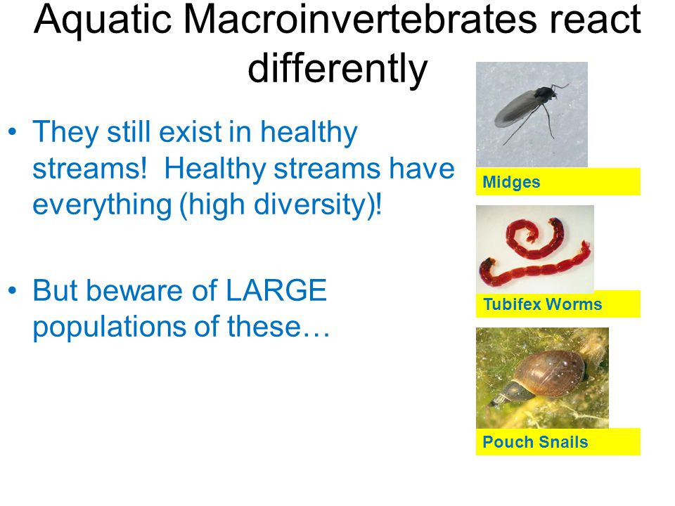 Aquatic Macroinvertebrates react differently