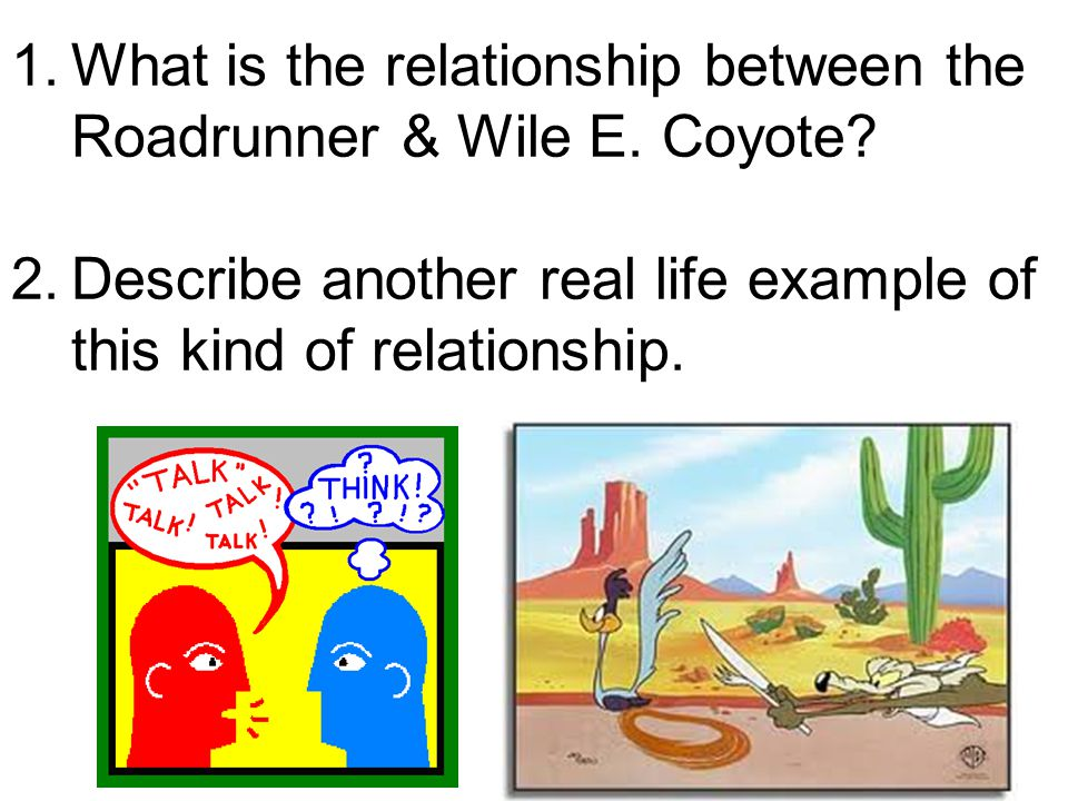 What is the relationship between the Roadrunner & Wile E. Coyote