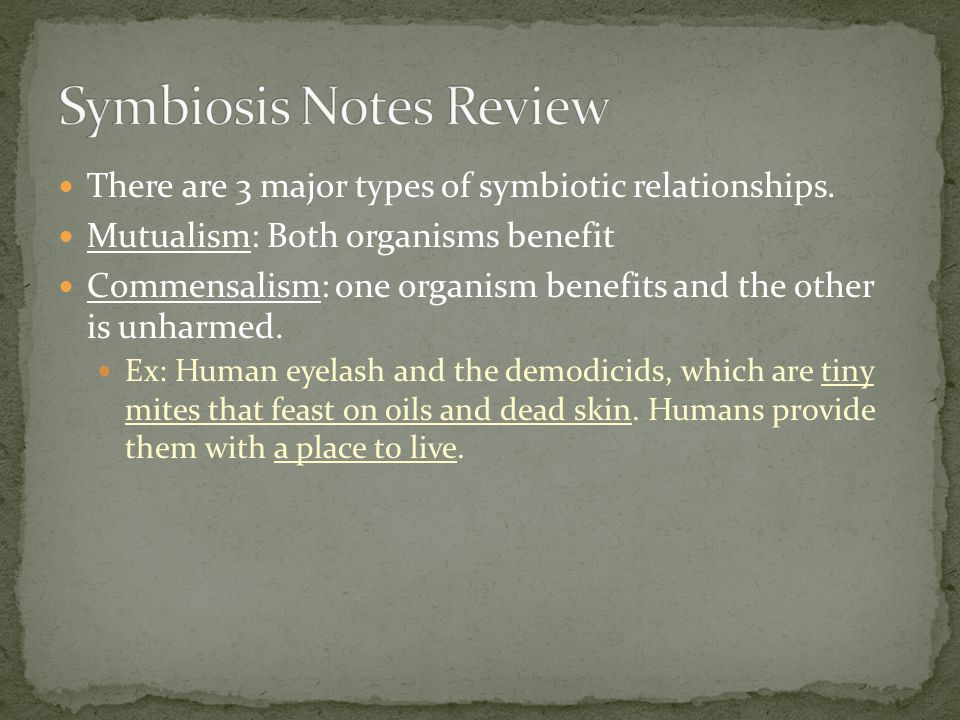 Symbiosis Notes Review