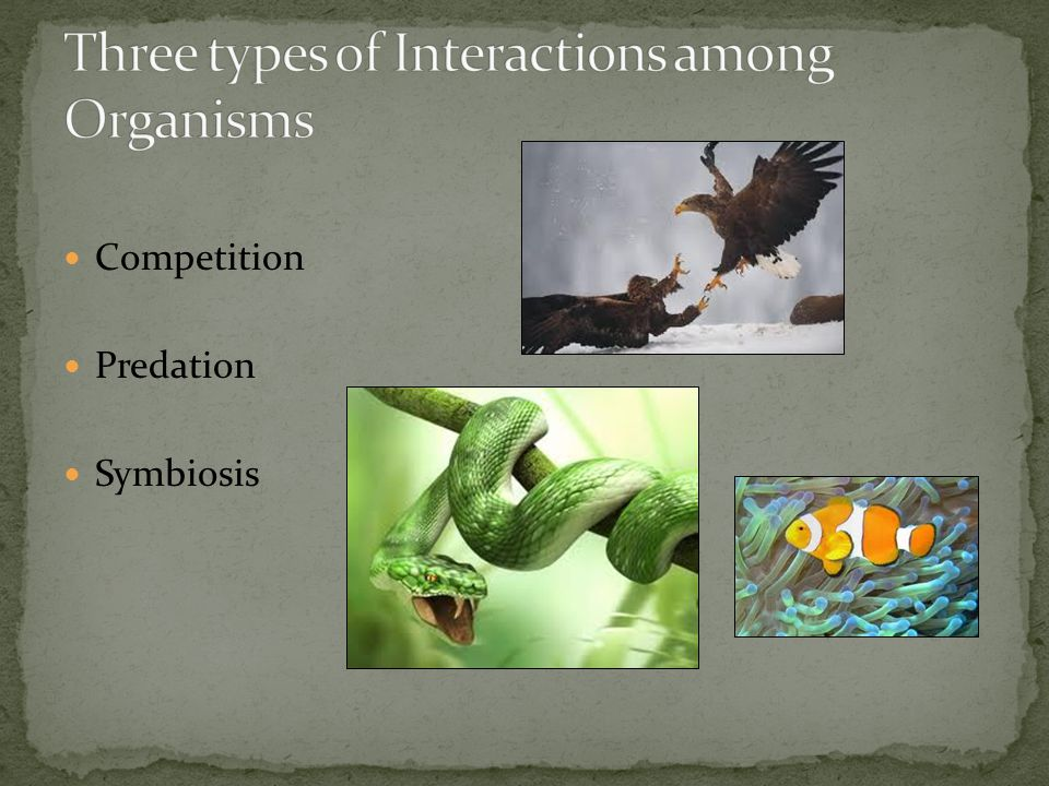Three types of Interactions among Organisms
