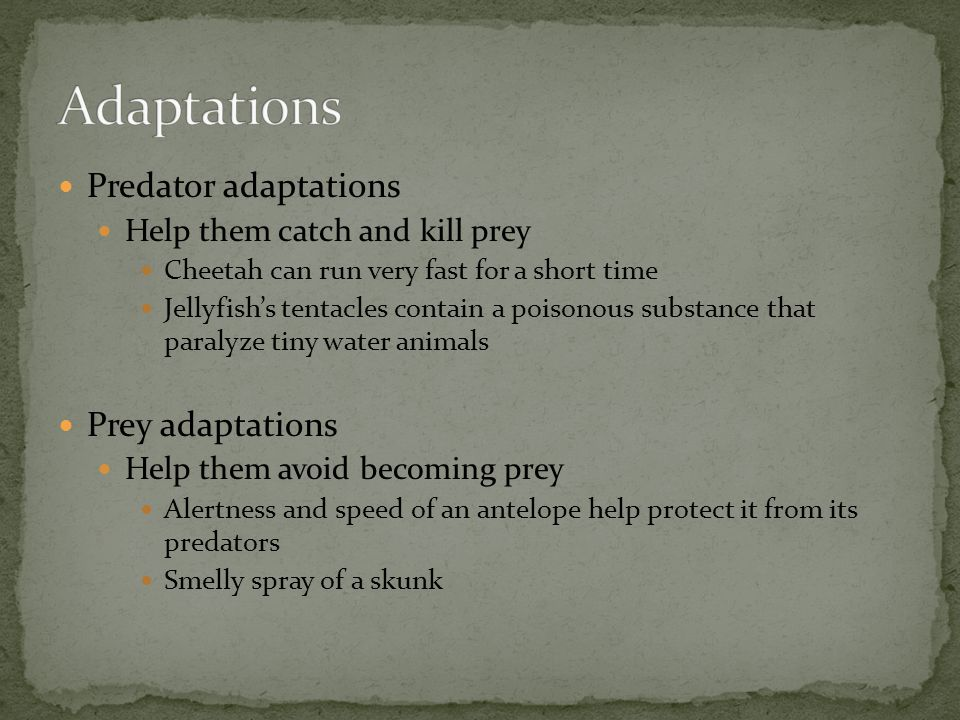 Adaptations Predator adaptations Prey adaptations