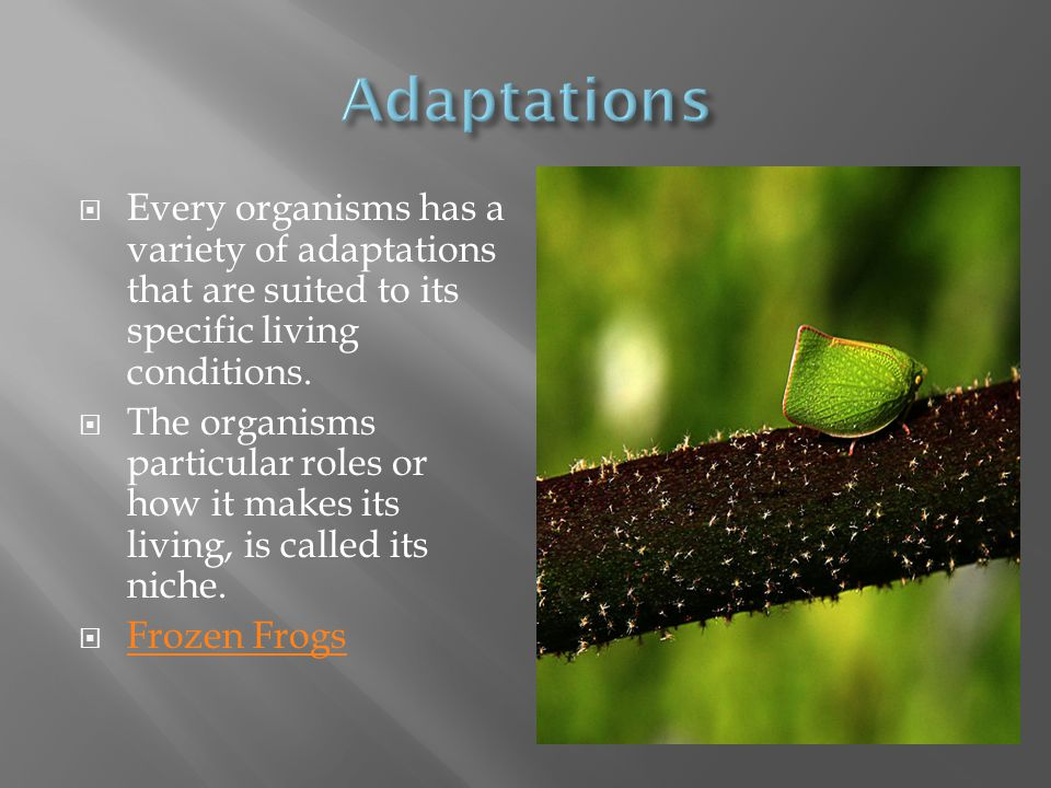 Adaptations Every organisms has a variety of adaptations that are suited to its specific living conditions.