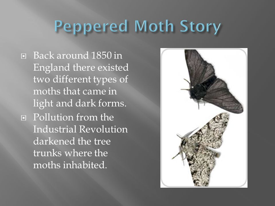 Peppered Moth Story Back around 1850 in England there existed two different types of moths that came in light and dark forms.