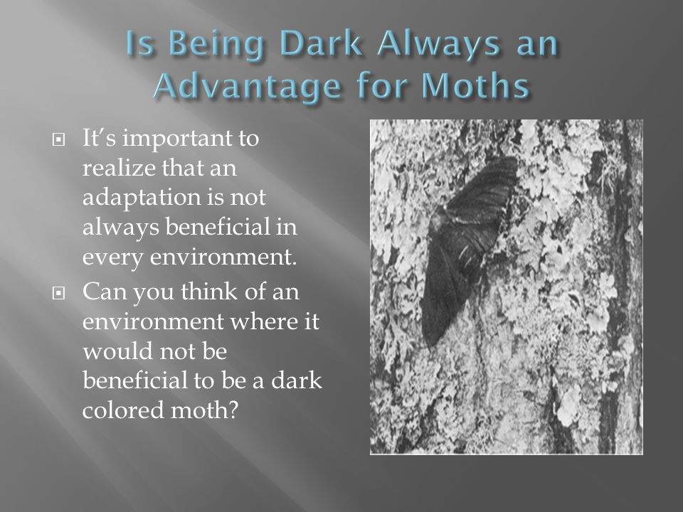 Is Being Dark Always an Advantage for Moths