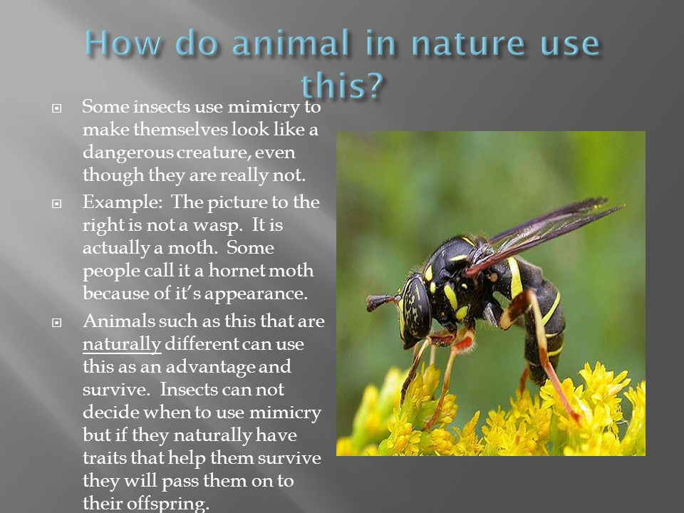 How do animal in nature use this