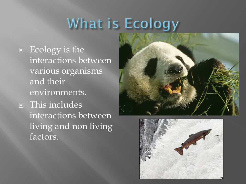 What is Ecology Ecology is the interactions between various organisms and their environments.
