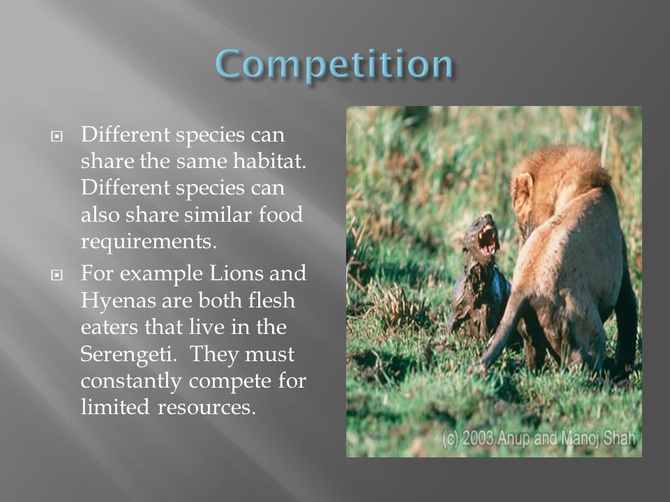 Competition Different species can share the same habitat. Different species can also share similar food requirements.