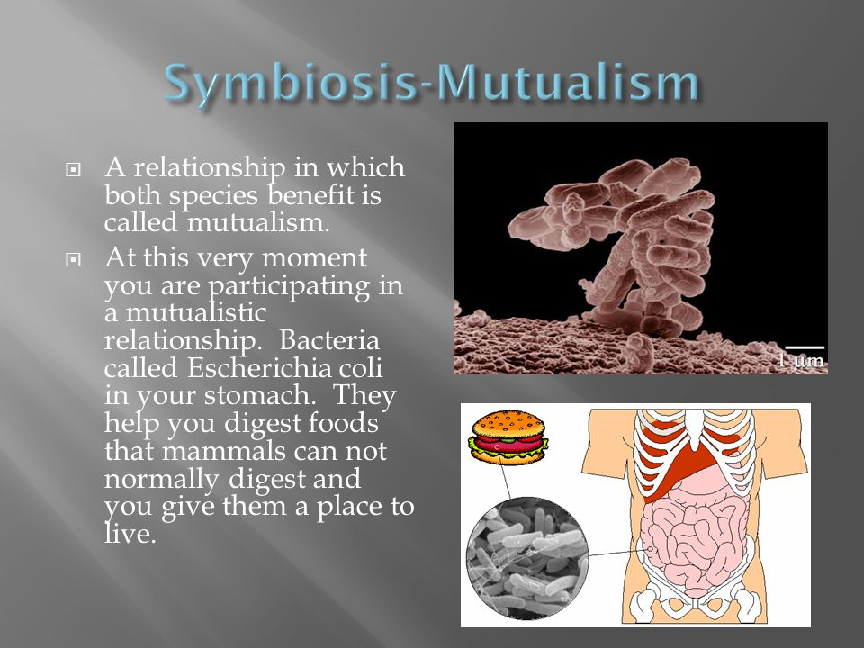 Symbiosis-Mutualism A relationship in which both species benefit is called mutualism.