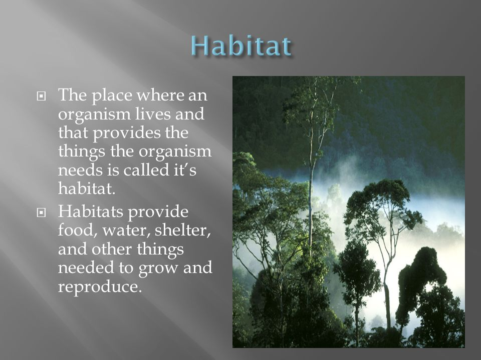 Habitat The place where an organism lives and that provides the things the organism needs is called it's habitat.