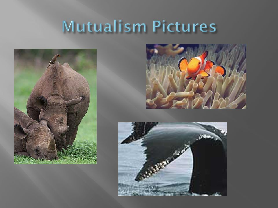 Mutualism Pictures