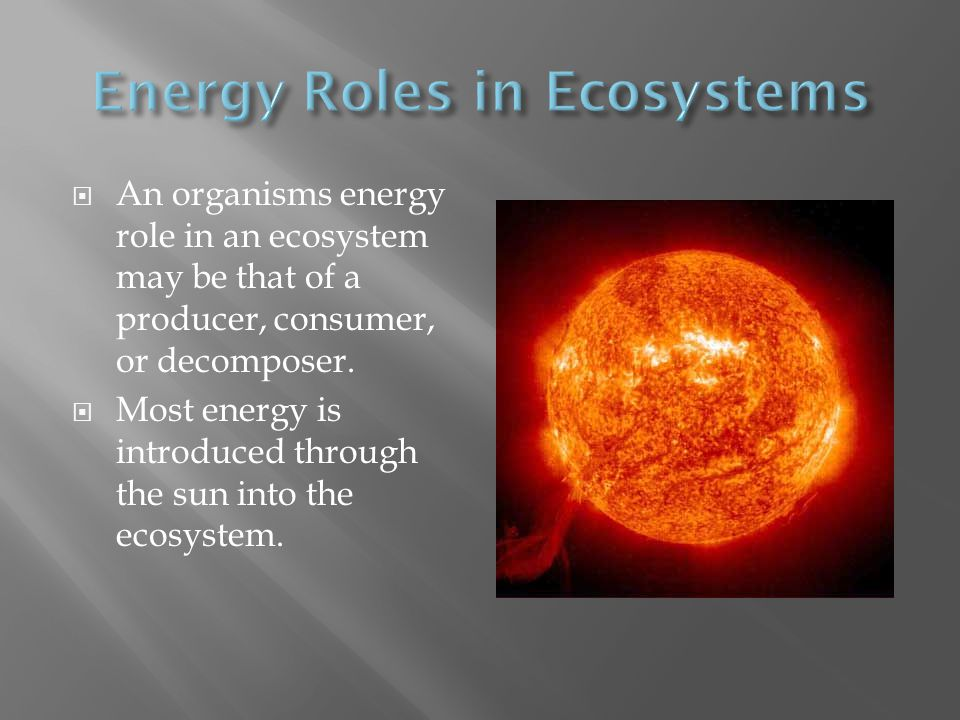 Energy Roles in Ecosystems