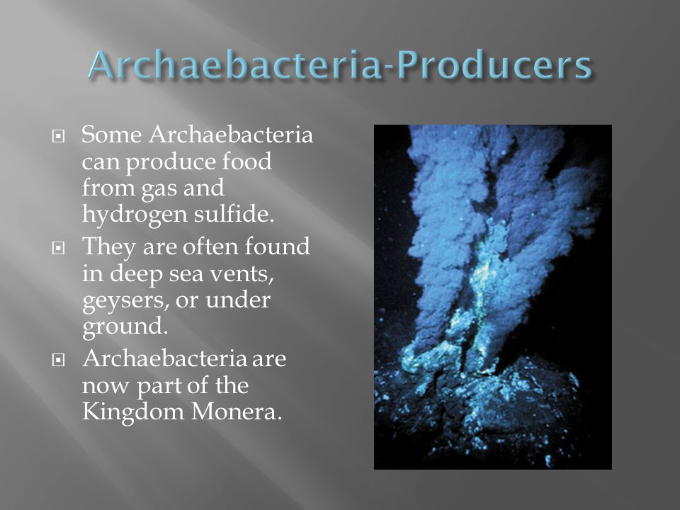 Archaebacteria-Producers