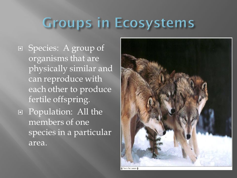 Groups in Ecosystems Species: A group of organisms that are physically similar and can reproduce with each other to produce fertile offspring.