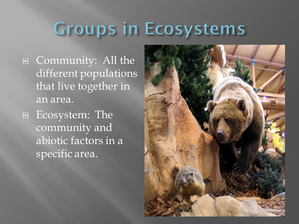 Groups in Ecosystems Community: All the different populations that live together in an area.