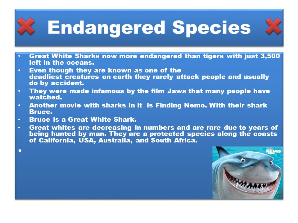 Endangered Species Great White Sharks now more endangered than tigers with just 3,500 left in the oceans.