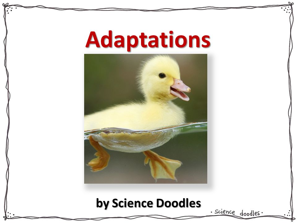 Adaptations by Science Doodles