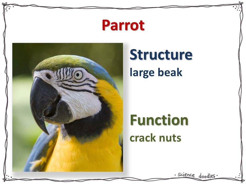 Parrot large beak crack nuts