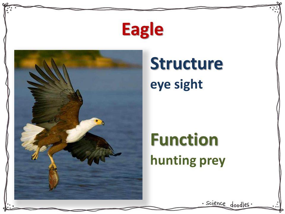 Eagle eye sight hunting prey