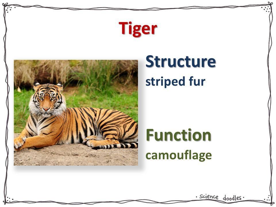 Tiger striped fur camouflage