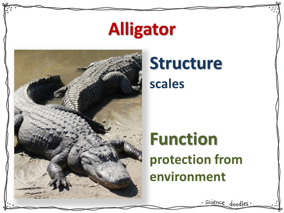 Alligator scales protection from environment