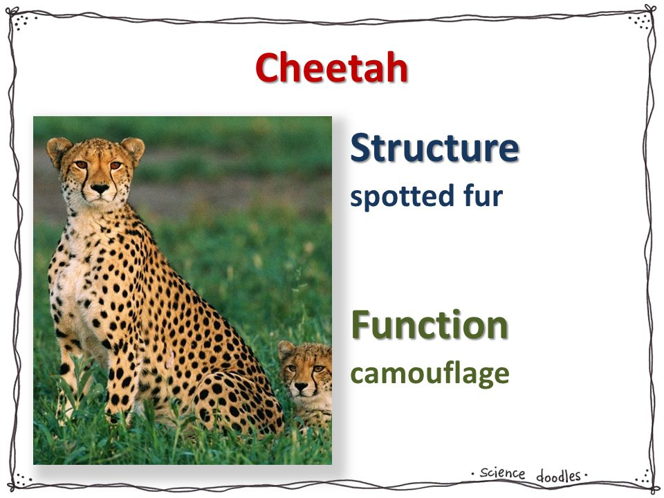 Cheetah spotted fur camouflage